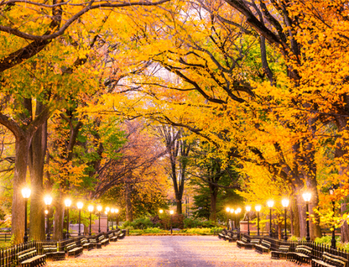 WHAT TO DO IN THE FALL IN NEW YORK CITY